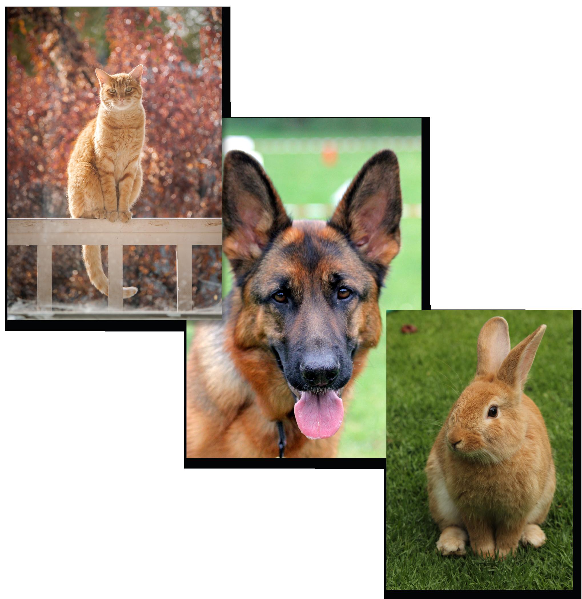 Clinique-vétérinaire-givors-grigny-chien-chat-nac-rdv-véto-opération-consultation-chasse-sur-rhone