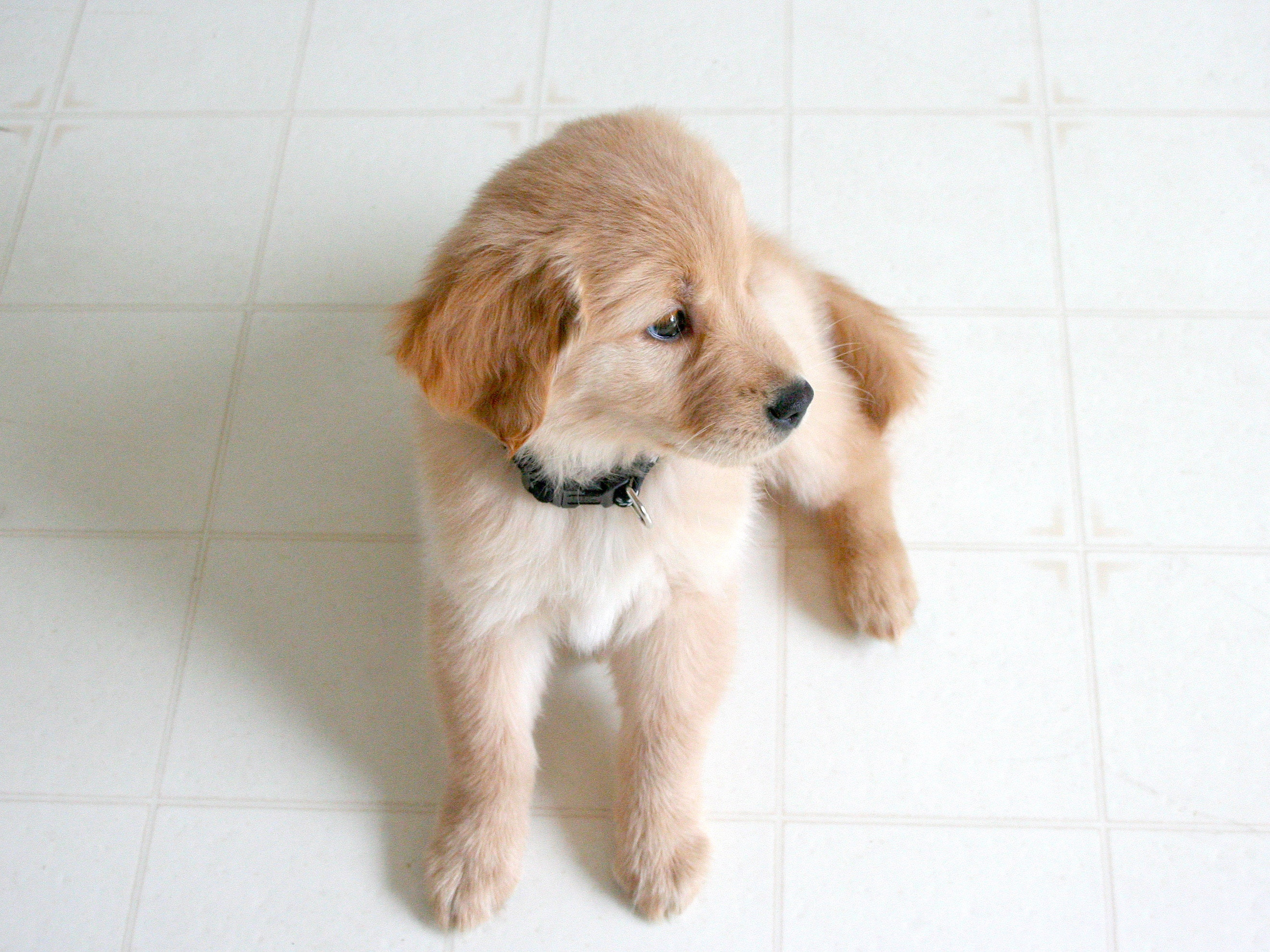 clinique veterinaire givors grigny chasse sur rhone véto consultation médicament chien chat poule