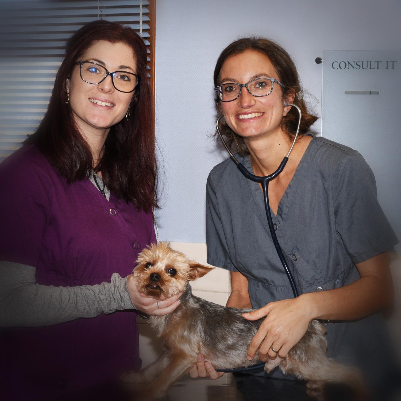 vétérinaire-véto-grigny-givors-chasse-urgence-animaux-animal-docteur-consultation